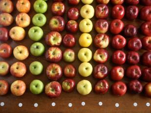 20150428-best-apples-for-pie-reupload-kenji-1